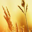 Как избежать последствий жары? Минздрав дал советы, как уберечь себя и близких