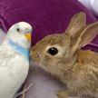 «Медаль за терпение»: милые кролики решили «попробовать на вкус» невозмутимого попугая