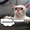 Кот принимал душ и на вопрос о самочувствии отвечал «нормально»