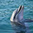 Вы когда-нибудь такое видели? Дельфин приносит людям подарки со дна океана (ВИДЕО)