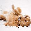 Собака скатилась со снежной горки и покорила Сеть