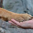 Настойчивый пес пытается привлечь внимание хозяина – очень смешное видео