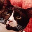 Кот пережил стирку в машинке и выжил (ФОТО)