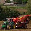 Шкловский район бьёт рекорды по урожайности картофеля