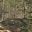 Все леса в Гомельской, Брестской и Гродненской областях закрыты для посещения
