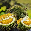 Редкий фрукт продают в Индонезии за $1000
