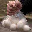 Мужчина похитил два десятка яиц из магазина в Борисове. Продавщица бросилась догонять (ВИДЕО)