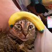 Вы будете смеяться! 10 фотографий котов, которые подтверждают, что у животных тоже есть эмоции