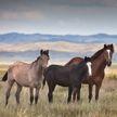 Житель Кыргызстана пытался незаконно ввезти в Казахстан пять лошадей, спрятав их в фургоне