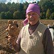 Картофелину в виде медведя нашли на Слонимщине