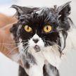 Почему кошки не любят воду? Причина ошеломит!