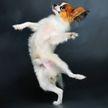 Собака танцевала от радости, когда увидела любимую еду! Интересно, откуда она знает движения? (ВИДЕО)