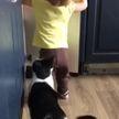 Годовалая девочка и кот грабят кухню. Посмотрите, вы такого еще не видели! (ВИДЕО)