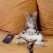 Котенок хотел съесть блюдо из телевизора. Посмотрите – 100% будете смеяться! (ВИДЕО)