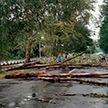 Последствия разгула стихии устраняют в Гомельской и Брестской областях