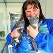 Женщина отказалась от престижной работы ради бездомных кошек