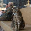 Умерла одна из самых известных кошек – Гли из Святой Софии