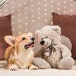 Собаки и медведь вместе играют. Только посмотрите, это невероятно! (ВИДЕО)