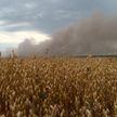 В Беларуси горят леса: за сутки пожарные выезжали четыре раза