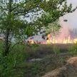 С начала года в Беларуси произошло 340 лесных пожаров