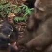 В Китае обезьяна напала на кормившую её девочку