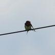 В Германии севшая на провода птица спровоцировала крупный пожар