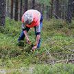 Пенсионерка пошла в лес собирать ягоды и умерла в Барановичском районе