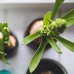 Новый тренд из TikTok: встряхните ваши растения, чтобы они стали крепче