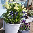 Не упустите момент: что посадить на балконе весной?