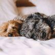 «Хочу собаку»: вышла серия роликов о том, как правильно завести собаку