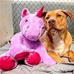 Бездомный пес 5 раз пытался стащить из магазина в США одного и того же плюшевого единорога: в итоге он получил и игрушку, и нового хозяина