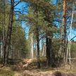 Уже в 10 районах Гомельской и Минской областей закрыты леса для посещения