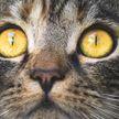Кошка спасла жизнь человеку в Японии – ее наградили и «назначили» начальником полиции