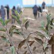 Лукашенко предложил закрепить сбор яблок за школьниками и студентами