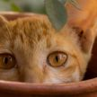 Кошка отвлекла буддийского монаха от молитвы