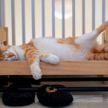 Вместо акул в IKEA стали популярными кровати для кукол. Узнайте, почему