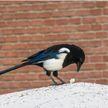 Птицы в городе: почему люди должны быть крайне осторожны с пернатыми и какую опасность они несут?