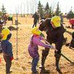 Парки семейных деревьев высадят родители с детьми
