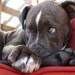 «И что ты мне сделаешь?» Собака запретила хозяевам смотреть телевизор. Ее наглый взгляд в конце рассмешит всех! (ВИДЕО)