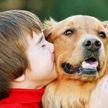 Собаки развивают способность ребёнка к чтению