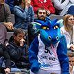 «Цмокі-Мінск» сыграет против румынской «Орадеи» в матче Кубка ФИБА-Европа