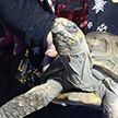 На Рождество 45-летняя черепаха устроила пожар в доме