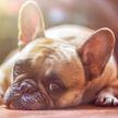 Реакция собаки на фильм поразила пользователей сети (ВИДЕО)