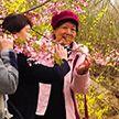 Сезон цветения сакуры начался в Японии и Китае