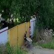 Самая смешная кража года: двое мальчиков украли садовую тачку