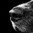 В Австрии собак учат искать зараженных COVID-19 по запаху