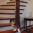 Лестницы, которые вы бы наверняка не преодолели (ПОДБОРКА ФОТО)