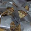 Полторы тысячи черепах, обмотанных клейкой лентой,  обнаружили в чемоданах в аэропорту Манилы