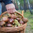 Плутал 10 дней: житель Витебского района заблудился в лесу и дошёл до России