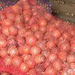 Стабилизационные фонды продовольствия формируют в Гомельской области